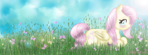Fluttershy's Meadow by chibrule