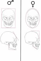 male and female skull differences by olgatarta