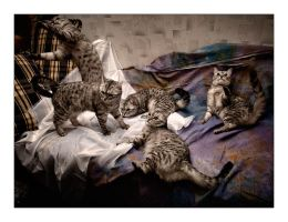 Cats family by manroms