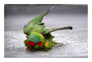 Animal : Shower Timeee by onealz