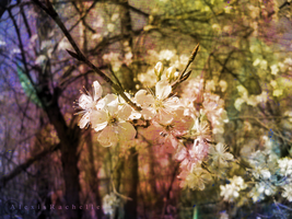 The Colors of Spring 1 by AlexisRachelle