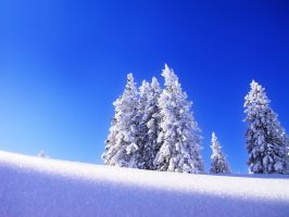 wallpaper of the snow-tree by magarita