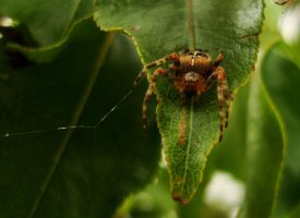 Guardian Spider by TreeClimber