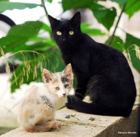 cats by Barbarafm