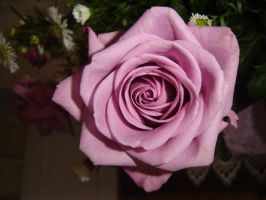 rose3 by hermiona1988
