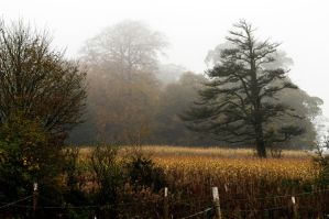 Tree in the Mist by waggysue