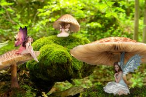 Fairy Forest by Nikki-vdp