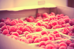 Fresh raspberries by nomatterwhy