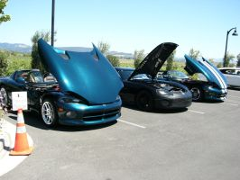 3 Pretty Little Vipers All In A Row by RoadTripDog