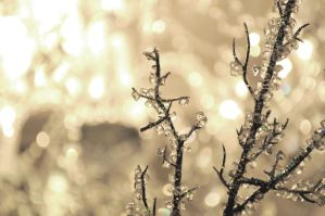 crystallized tree by Elenapearl