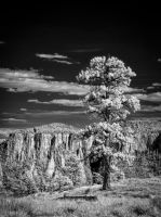 Old Guard in Infrared II by eprowe