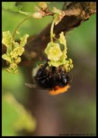 Another bee by AlmetosDon