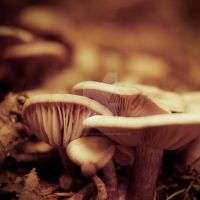 Mushroom kingdom by ChromaticBokeh