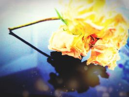 Faded Flower by Hiromi415