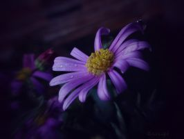 .:. by Weissglut