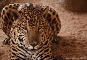 Jaguar by NawalAckermann