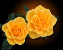 TWO YELLOW ROSES by THOM-B-FOTO