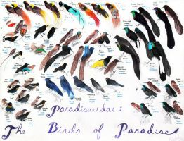 Birds of Paradise by EagleFlyte
