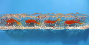 Goldfish 3d Art Clear by goldfishinspiration
