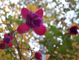 Fuschia by Alice77222