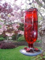 Hummingbird Feeder by Bwabbit