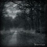 In the dark forest new serie 3 by CountessBloody