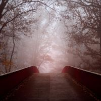 The Way by Abyssinians