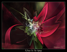 A Flower for your Holidays by Szellorozsa