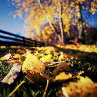 Autumn carpet II by Al-Baum