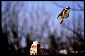 3..2..1... LIFT OFF by freezeframe666