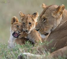Family of Cats by MorkelErasmus
