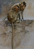 Temple Monkey No. 3 - Watercolor by AstridBruning