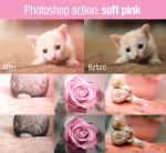 Soft pink action by Pamba