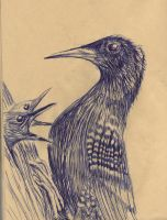 Birds in Ballpoint by philippeL