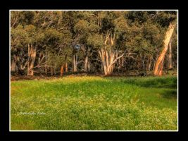 Wind in the Gums by FireflyPhotosAust