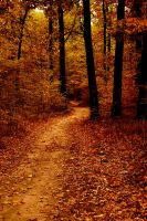 Autumn Path by JordanRobin
