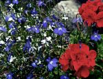 Some flowers by bad8luck