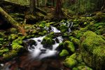 Sol Duc Falls Trail, Study 2c by greglief
