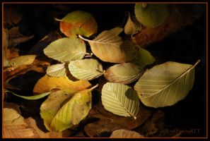 Leaf Four by kayaksailor