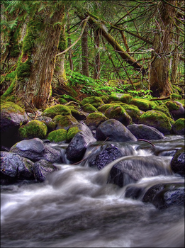 Deep Forest Flow by wb-skinner