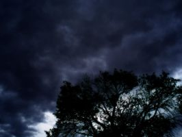 Strom - A Tree by Melops1ttacus