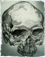 skull by isaac-laforete