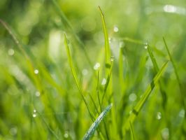 Grass 4 by mary-petroff