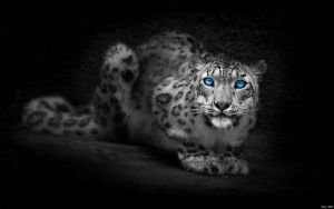 EgFox LeoparD7 blue eye HD by Eg-Art
