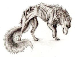 Starving Wolf by Fullmetal-puppy