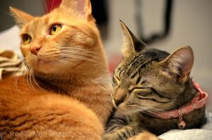 Brother and Sister by ImagesbyAllieCat
