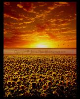 Sunset at the Sunflower Field by Jenna-Rose