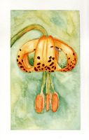 Tigerlilly Watercolor by Caitiekabob