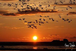 Back to the Roost by Robin-Hugh
