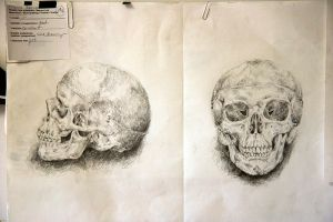 capricious skulls by capricious